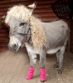 Strange Case Of The Shapeshifting Donkey Hooker
