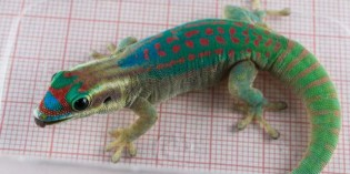 All of Russia's Sex Geckos Have Died In Space