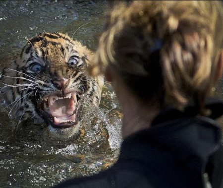 Tiger having sex with a woman turned out to be a man in fancy dress